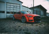 Kivállasodott  vadló- Mustang a mai recept szerint.
